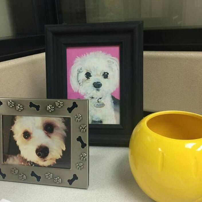 Dog 8.2015